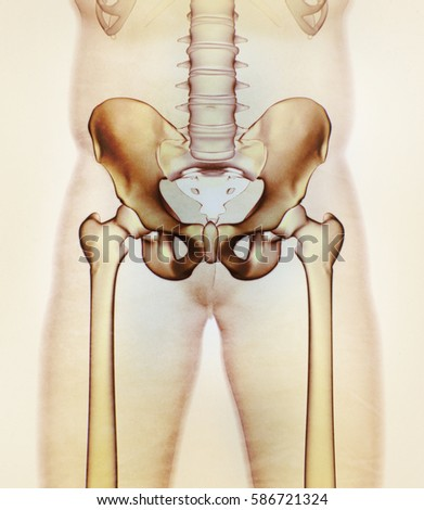Ilium Bone Hip Bone Pelvis Human Stock Illustration 586721324