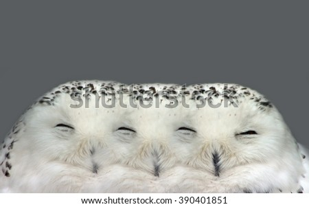 Illusion of Dreamy Snow Owl Dream - stock photo