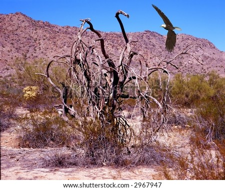 Illustrated bald eagle flying in the desert - stock photo