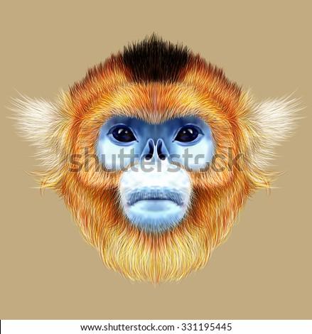 Illustrated Portrait of Golden snub-nosed monkey. The wild cute mokey of Southwest China - stock photo