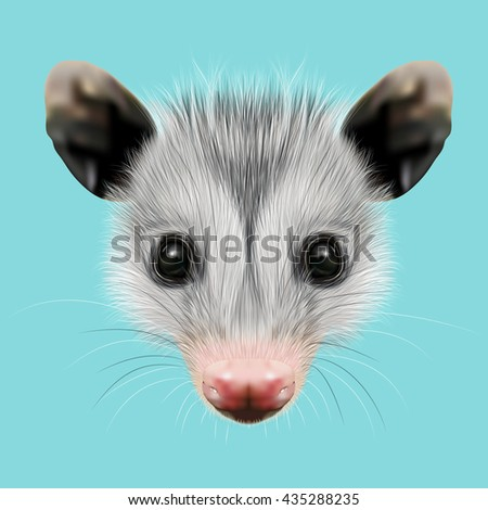 Illustrated Portrait of Opossum. Cute fluffy face of Opossum on blue background. - stock photo