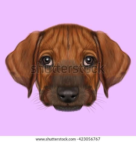Top Rhodesian Ridgeback Brown Adorable Dog - stock-photo-illustrated-portrait-of-rhodesian-ridgeback-dog-cute-orange-face-of-domestic-puppy-on-pink-423056767  2018_396660  .jpg