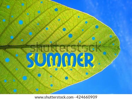 ILLUSTRATION COMPOSITION OF SUMMER - stock photo