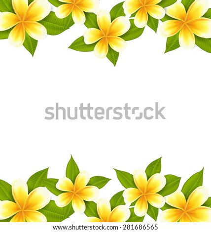 Illustration decoration frame made in frangipani (plumeria), ornament with exotic flowers on white background - raster - stock photo