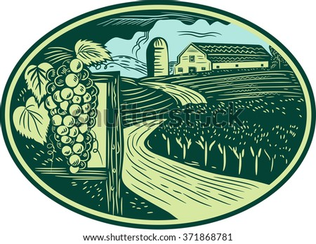 Illustration of a bunch of grapes on vine with leaves with winding road in vineyard or winery and barn farmhouse in background set inside oval shape done in retro woodcut style.  - stock photo