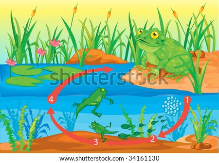 Illustration of  a cartoon frog on white (vector available in portfolio) - stock photo