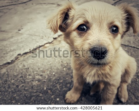 Illustration of a homeless puppy on the street - stock photo