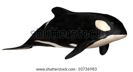 Illustration of a killer whale isolated on a white background - stock photo