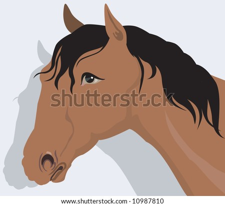Illustration of a muscular horse with black hair in light back ground
