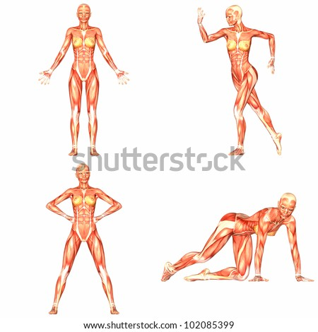 Illustration of a pack of four (4) female characters showing the human body anatomy with different poses isolated on a white background - 4of5 - stock photo