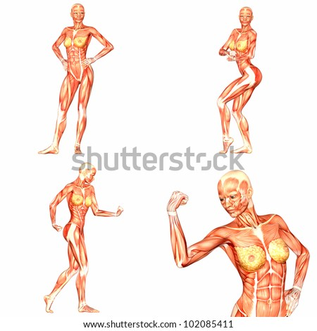 Illustration of a pack of four (4) female characters showing the human body anatomy with different poses isolated on a white background - 5of5