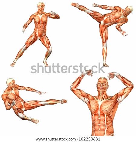 Illustration of a pack of four (4) male characters showing the human body anatomy with different poses isolated on a white background - 2of3