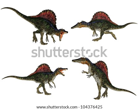 Illustration of a pack of four (4) Spinosaurus (dinosaur species) with different poses isolated on a white background