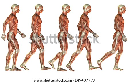 Illustration of a running man as a muscle study - stock photo