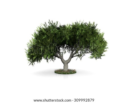 illustration of a tree with white background