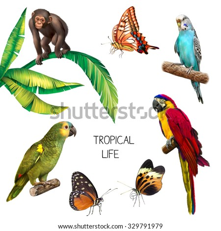illustration of baby monkey Gorilla, Colorful red parrot macaw, blue budgerigar, orange butterfly, green parrot and little red butterfly, isolated on white background - stock photo