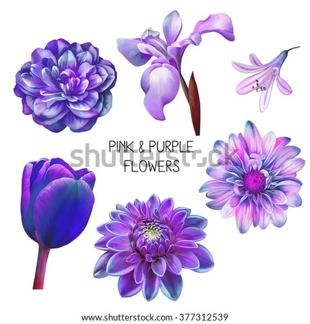 Illustration Of Beautiful Blue And Purple Flowers Isolated On White Background Camellia Rose