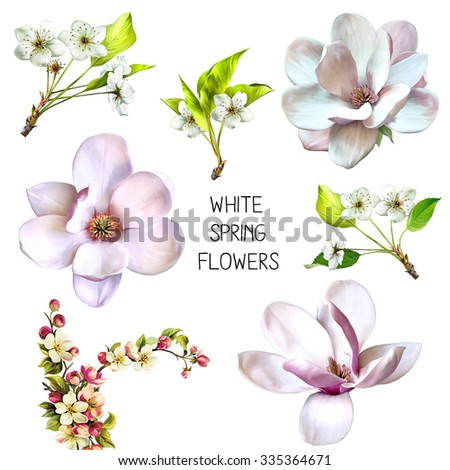 Illustration of beautiful magnolia, cherry tree flowers, Spring flower isolated on white background - stock photo