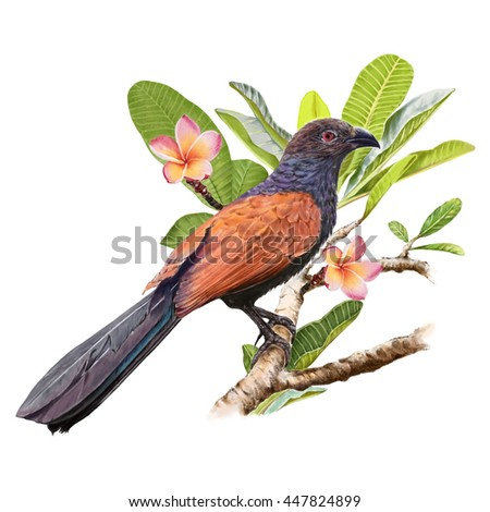 illustration of bird with flower  on white background