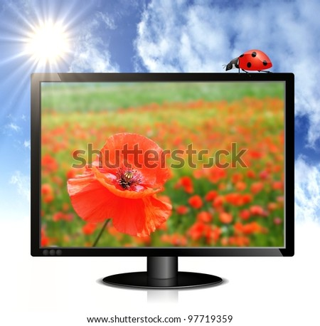 illustration of black lcd monitor with image of red poppy, ladybug, sunny summer sky and clouds