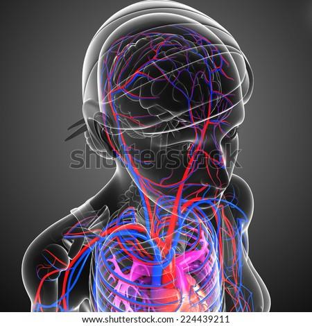 Illustration of brain circulatory system - stock photo