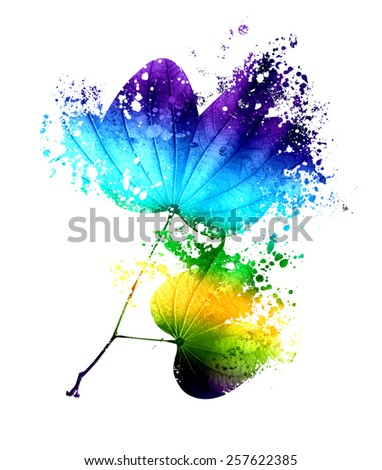 Illustration of Butterfly shape leaves with paint splash , isolated on white background Abstract Bauhinia leaves  - stock photo