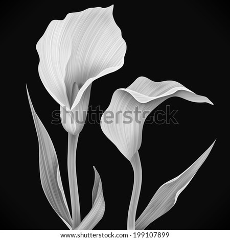 Illustration of calla lily flower and green leaves - stock photo