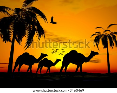 Illustration of Camels walking in desert sunset, birds in sky, scene framed with palm trees. Travel concept. - stock photo