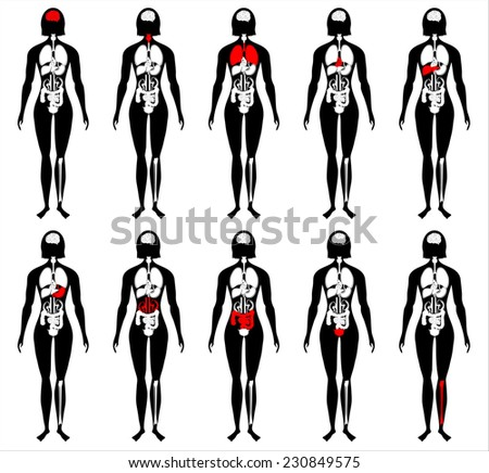 illustration of diagram of human anatomy - stock photo