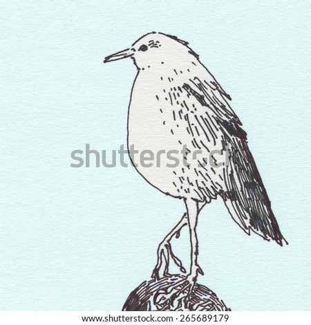 Illustration of fat bird seagull ink on textured paper