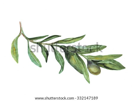 Illustration of fresh green olive branch with ripe fruits - stock photo