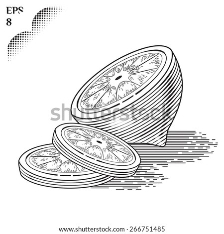 Illustration of fresh half an lemon with slices.  vintage fruit. Stylized drawing hands. Engraving image of food. Isolated lime on white background - stock photo
