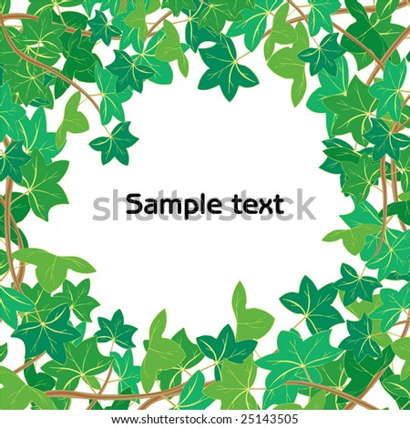 illustration of Green ivy isolated on white background with space for your text or picture - stock photo
