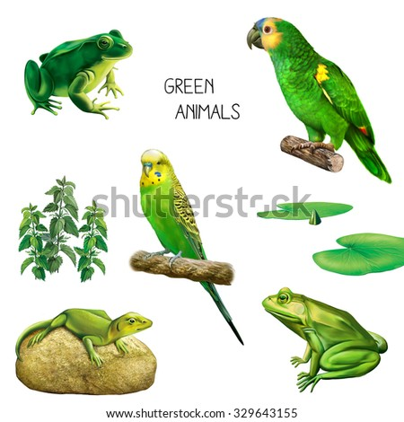 Illustration of green tropical animals and plants: green parrot, Budgerigar, lizard, green toad or a frog, green water lily leaves isolated on white background - stock photo