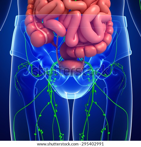 Illustration of human body lymphatic and digestive system artwork - stock photo