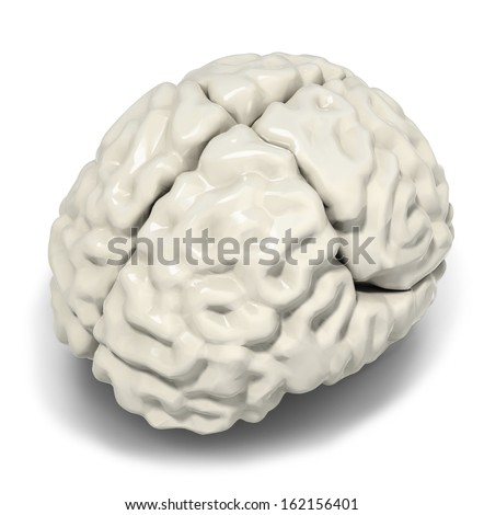 Illustration of human brain, isolated on white - stock photo