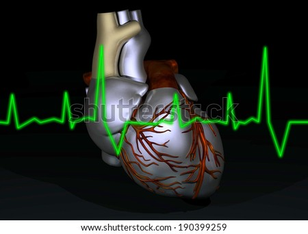 illustration of human heart  - stock photo