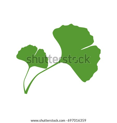 Illustration Of Isolated One Color Green Silhouette Two Leaves Ginkgo Biloba On White Background