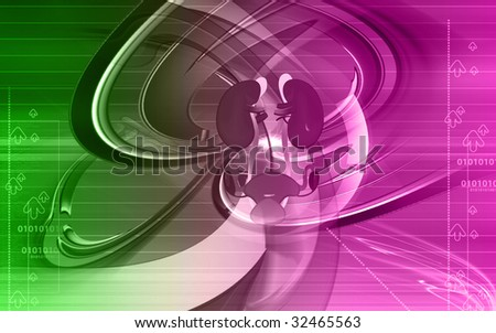 Illustration of kidney system in red background - stock photo