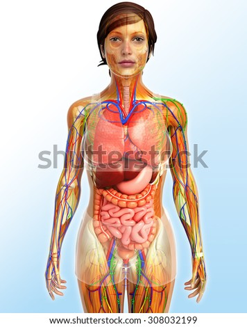 illustration of Lymphatic, skeletal, nervous and circulatory system of female - stock photo