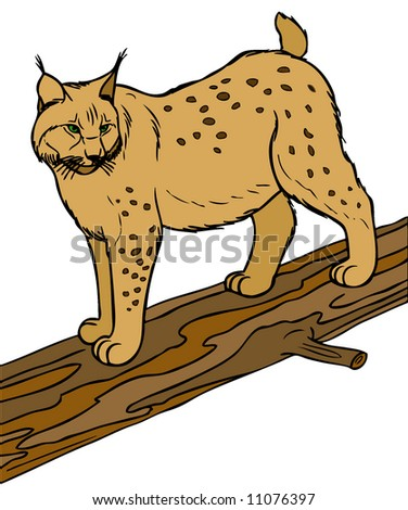 Illustration of lynx. - stock photo