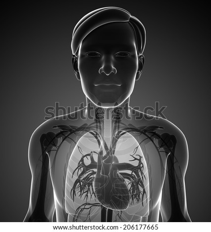 Illustration of male x-ray respiratory system artwork