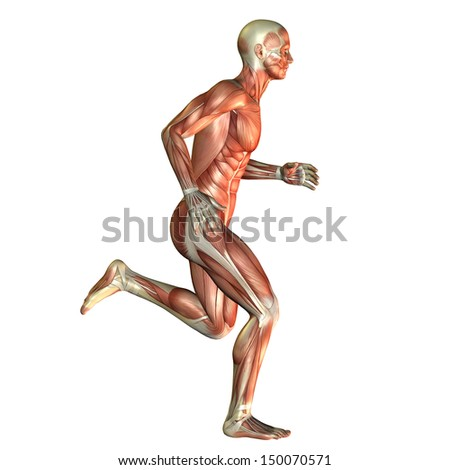 Illustration of muscle in a running man - stock photo