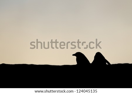 Illustration of penguin in a silhouette image - stock photo
