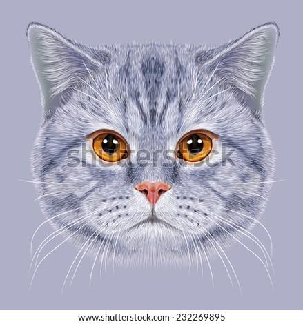 Illustration of Portrait British short hair Cat. Cute grey tabby Domestic cat with orange eyes. - stock photo