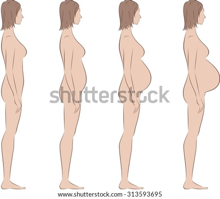 Illustration of pregnant female silhouette. Change in proportions from the first trimester till birth. Side view. Raster version