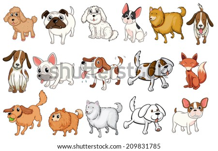 Illustration of the different breeds of dogs on a white background - stock photo