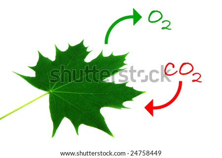Illustration of the photosynthesis process. - stock photo
