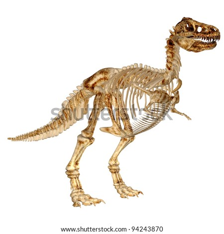 Illustration of the skeleton of a Tyrannosaurus Rex (T-Rex) isolated on a white background