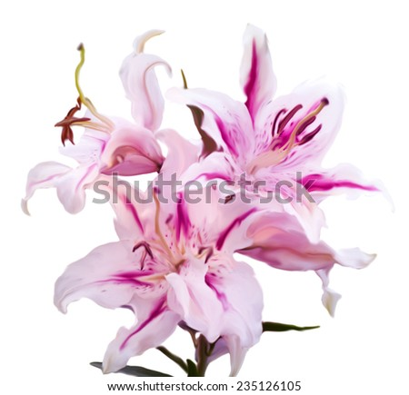 illustration of the tiger woods lilium isolated on white background - stock photo